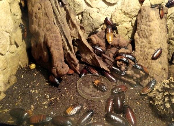 PRAGUEZOO-пражский-зоопарк-Виды-животных-и-рекомендации-для-посетителей-зоопарка-54