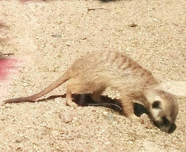 PRAGUEZOO-пражский-зоопарк-Виды-животных-и-рекомендации-для-посетителей-зоопарка-56