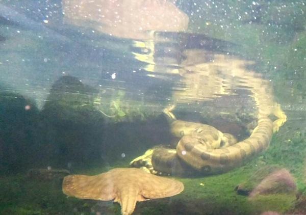 PRAGUEZOO-пражский-зоопарк-Виды-животных-и-рекомендации-для-посетителей-зоопарка-59