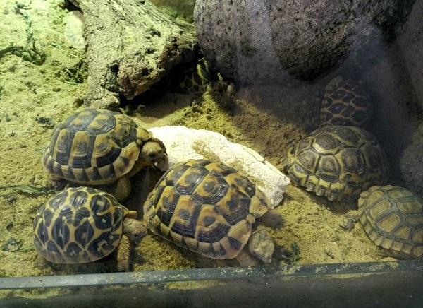 PRAGUEZOO-пражский-зоопарк-Виды-животных-и-рекомендации-для-посетителей-зоопарка-60
