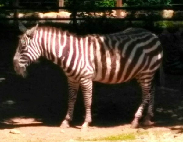 PRAGUEZOO-пражский-зоопарк-Виды-животных-и-рекомендации-для-посетителей-зоопарка-61