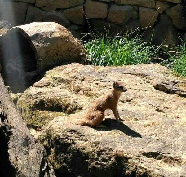 PRAGUEZOO-пражский-зоопарк-Виды-животных-и-рекомендации-для-посетителей-зоопарка-62