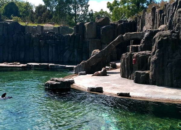 PRAGUEZOO-пражский-зоопарк-Виды-животных-и-рекомендации-для-посетителей-зоопарка-7