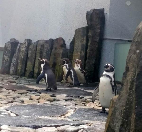 PRAGUEZOO-пражский-зоопарк-Виды-животных-и-рекомендации-для-посетителей-зоопарка-8