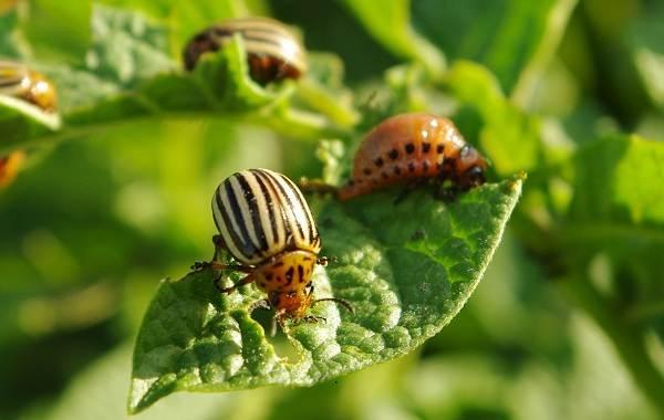 Виды-жуков-Классификация-особенности-строения-и-поведения-название-и-фото-видов-жуков-12