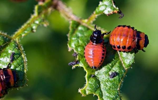 Виды-жуков-Классификация-особенности-строения-и-поведения-название-и-фото-видов-жуков-13