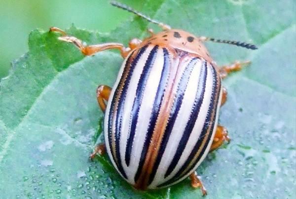 Виды-жуков-Классификация-особенности-строения-и-поведения-название-и-фото-видов-жуков-14