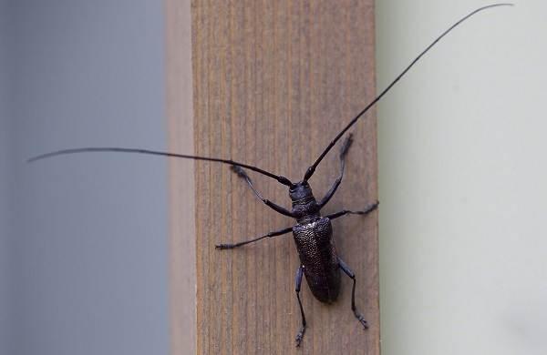 Виды-жуков-Классификация-особенности-строения-и-поведения-название-и-фото-видов-жуков-15