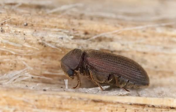 Виды-жуков-Классификация-особенности-строения-и-поведения-название-и-фото-видов-жуков-17