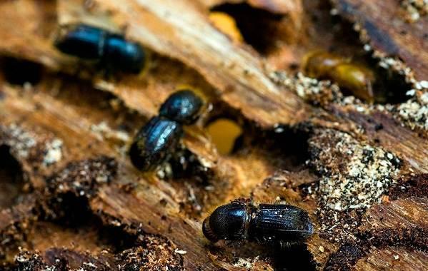 Виды-жуков-Классификация-особенности-строения-и-поведения-название-и-фото-видов-жуков-19