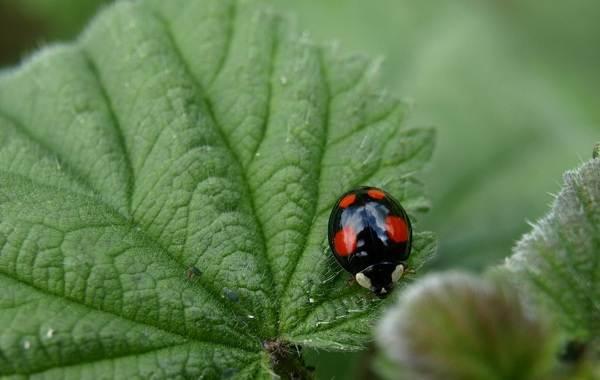 Виды-жуков-Классификация-особенности-строения-и-поведения-название-и-фото-видов-жуков-23