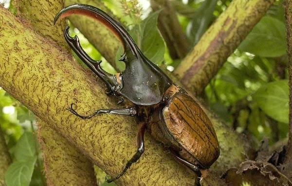Виды-жуков-Классификация-особенности-строения-и-поведения-название-и-фото-видов-жуков-24