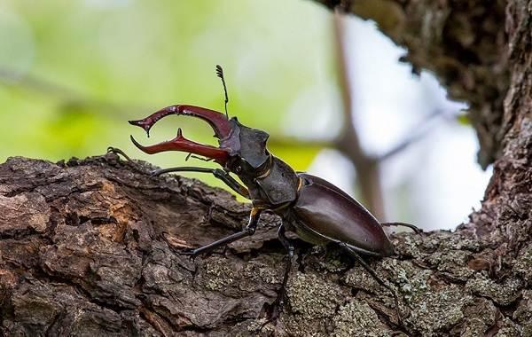 Виды-жуков-Классификация-особенности-строения-и-поведения-название-и-фото-видов-жуков-27