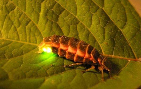 Виды-жуков-Классификация-особенности-строения-и-поведения-название-и-фото-видов-жуков-28