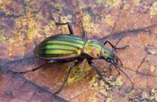 Виды жуков. Классификация, особенности строения и поведения, название и фото видов жуков