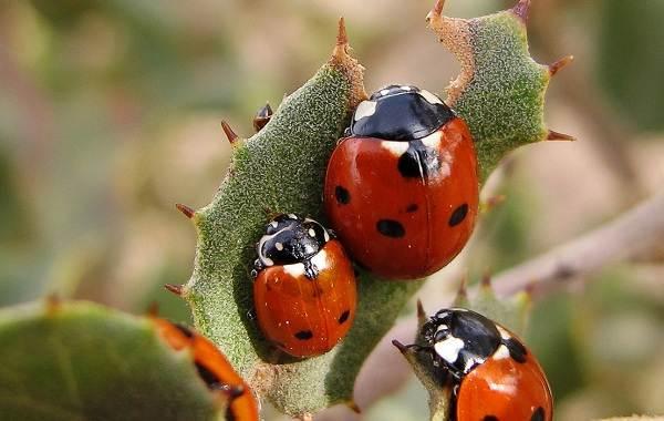 Виды-жуков-Классификация-особенности-строения-и-поведения-название-и-фото-видов-жуков-8