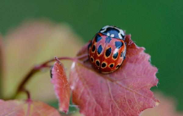 Виды-жуков-Классификация-особенности-строения-и-поведения-название-и-фото-видов-жуков-9