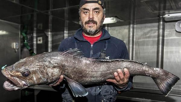 Клыкач-рыба-Описание-особенности-виды-образ-жизни-и-ловля-клыкача-4