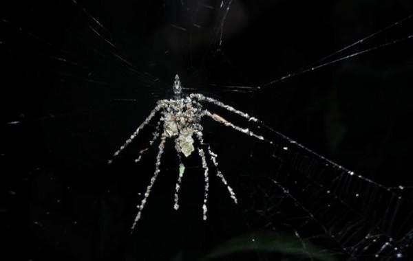 Виды-пауков-Описание-названия-фото-особенности-строения-и-поведения-видов-пауков-13