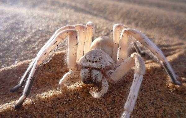 Виды-пауков-Описание-названия-фото-особенности-строения-и-поведения-видов-пауков-14