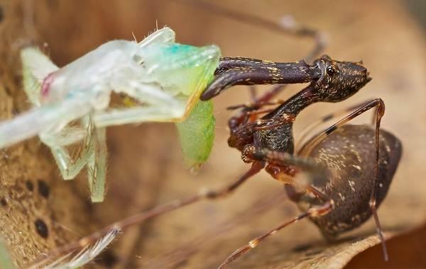 Виды-пауков-Описание-названия-фото-особенности-строения-и-поведения-видов-пауков-19