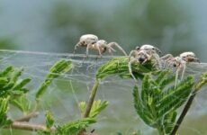 Виды пауков. Описание, названия, фото, особенности строения и поведения видов пауков