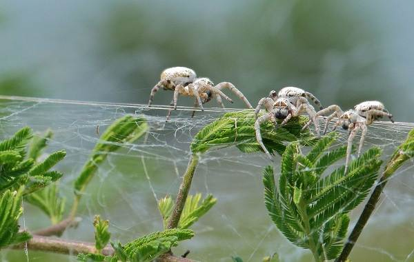 Особенности внешнего строения пауков