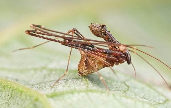 Виды-пауков-Описание-названия-фото-особенности-строения-и-поведения-видов-пауков-20