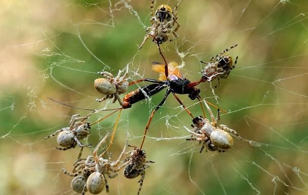 Виды-пауков-Описание-названия-фото-особенности-строения-и-поведения-видов-пауков-21