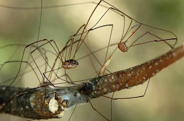 Виды-пауков-Описание-названия-фото-особенности-строения-и-поведения-видов-пауков-28