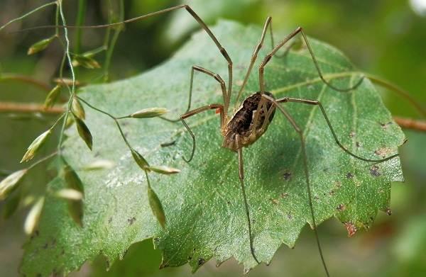 Виды-пауков-Описание-названия-фото-особенности-строения-и-поведения-видов-пауков-29