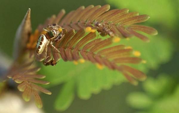 Виды-пауков-Описание-названия-фото-особенности-строения-и-поведения-видов-пауков-3