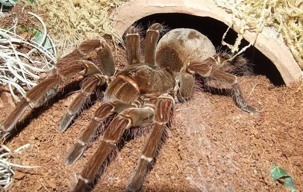 Виды-пауков-Описание-названия-фото-особенности-строения-и-поведения-видов-пауков-31
