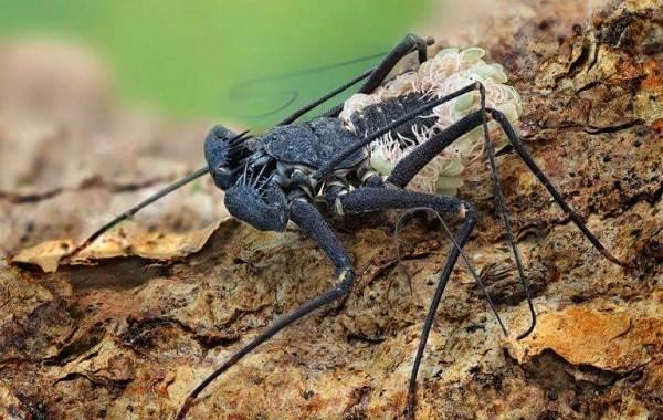 Виды-пауков-Описание-названия-фото-особенности-строения-и-поведения-видов-пауков-32