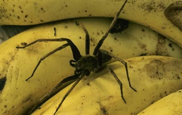 Виды-пауков-Описание-названия-фото-особенности-строения-и-поведения-видов-пауков-5