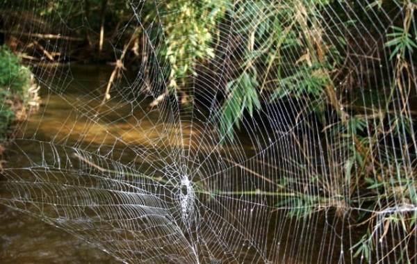 Виды-пауков-Описание-названия-фото-особенности-строения-и-поведения-видов-пауков-6