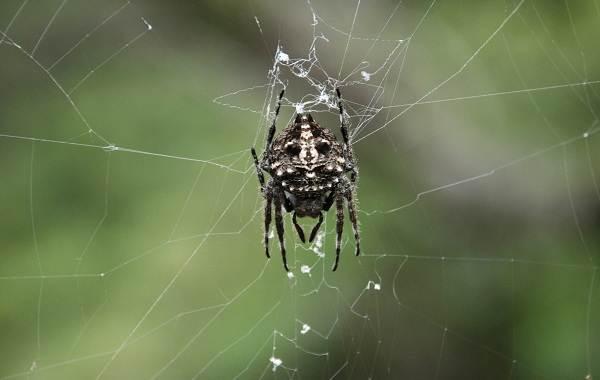 Виды-пауков-Описание-названия-фото-особенности-строения-и-поведения-видов-пауков-7