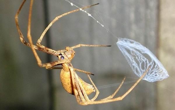 Виды-пауков-Описание-названия-фото-особенности-строения-и-поведения-видов-пауков-8