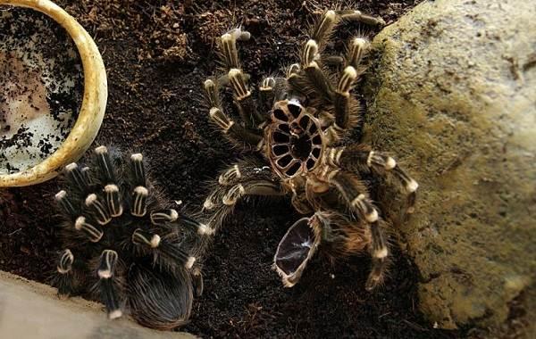Виды-пауков-Описание-названия-фото-особенности-строения-и-поведения-видов-пауков