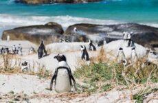 Виды пингвинов. Описание, названия, особенности, фото и образ жизни видов пингвинов