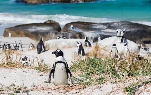 Виды-пингвинов-Описание-названия-особенности-фото-и-образ-жизни-видов-пингвинов-1