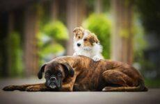 Добрые породы собак. Описание, особенности, названия и фото добрых пород собак