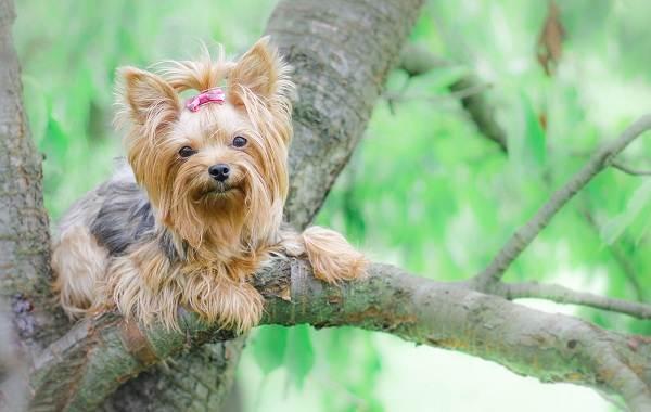 Добрые-породы-собак-Описание-особенности-названия-и-фото-добрых-пород-собак-25