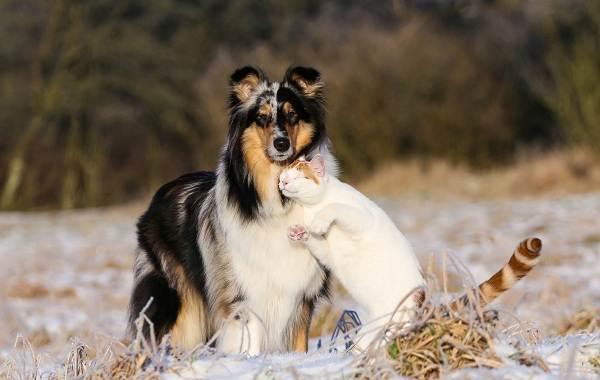 Добрые-породы-собак-Описание-особенности-названия-и-фото-добрых-пород-собак-27