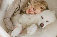Гипоаллергенные породы собак. Описание, названия, виды и фото гипоаллергенных пород