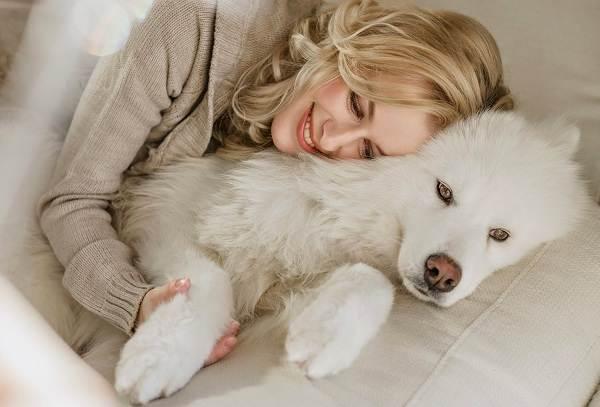 Гипоаллергенные-породы-собак-Описание-названия-виды-и-фото-гипоаллергенных-пород-16