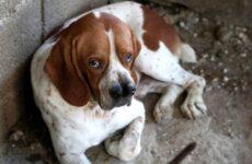 Каталбурун порода собаки. Описание, особенности, виды, характер и фото каталбуруна