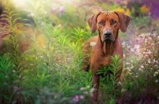 Красивые породы собак. Описание, названия, виды и фото красивых собак