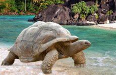 Виды черепах. Описание, особенности, названия и фото видов черепах