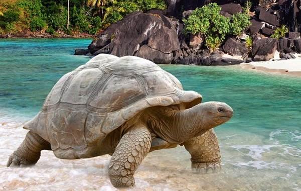 Виды-черепах-Описание-особенности-названия-и-фото-видов-черепах-1